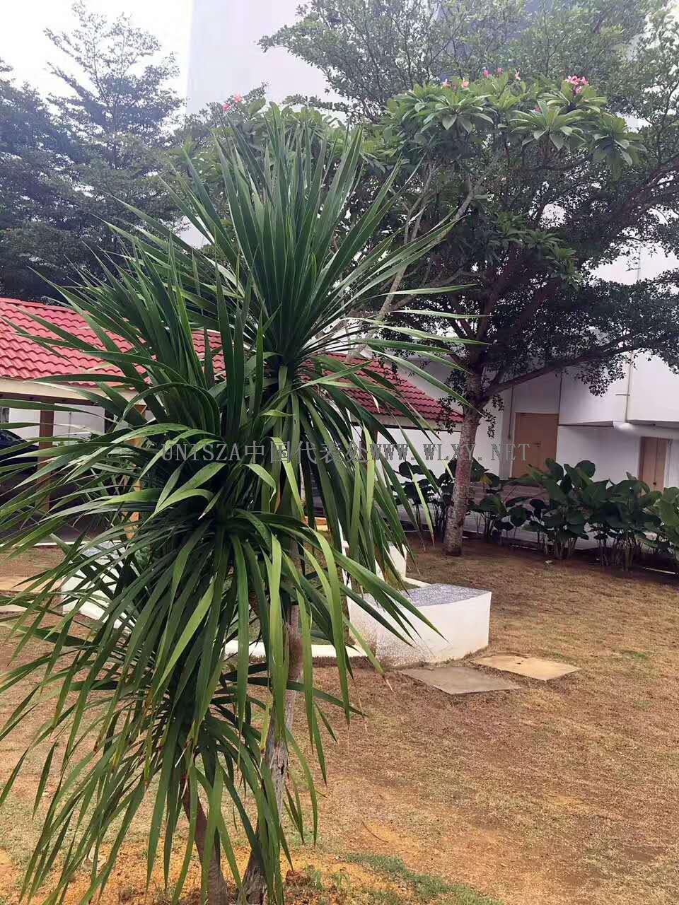 马来西亚苏丹再纳阿比丁大学